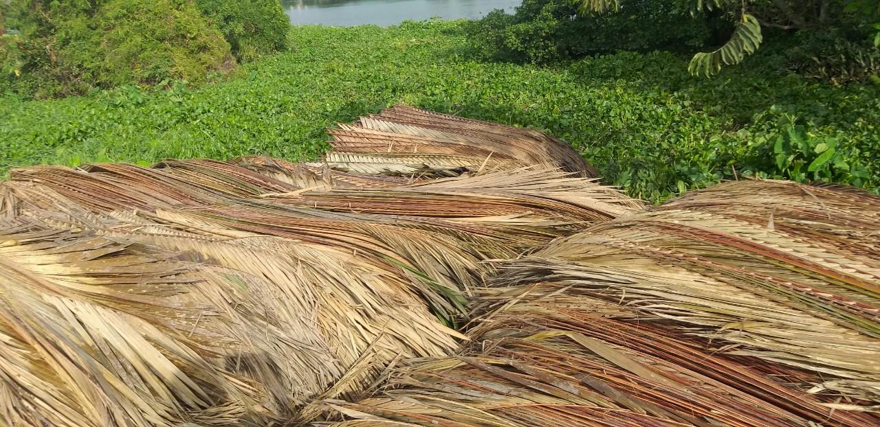 Lợp mái lá dừa nước - nguyên liệu phổ biến nhất trong làm nhà mái lá
